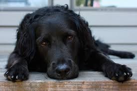 el can de pezza